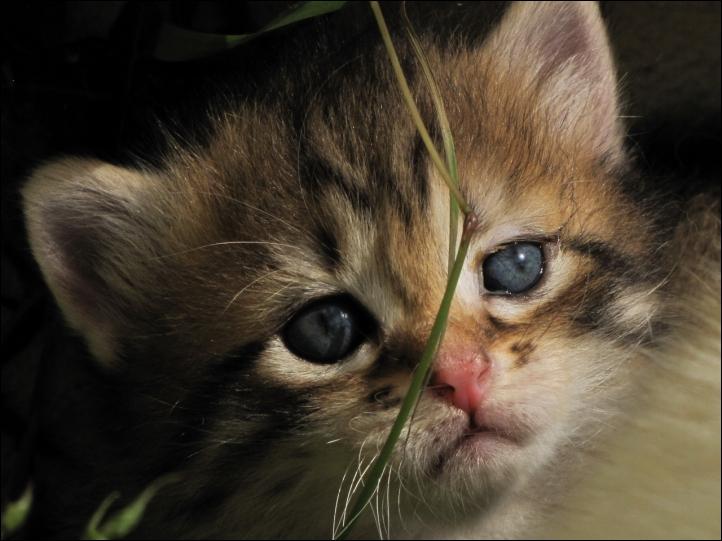 Combien de griffes a le chat ?