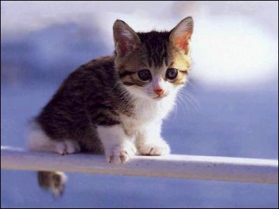Quel aliment ne faut-il jamais donner à un chat ?