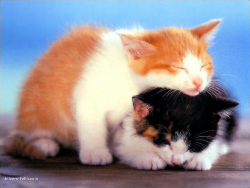 Qu'est-ce qu'un chat anoure ?