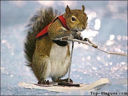 Quel est cet animal qui fait du ski ?