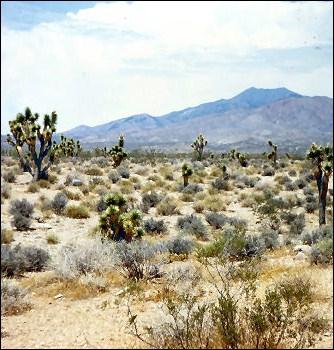 Au milieu de quel désert, le plus sec des quatre déserts nord-américains, la ville se trouve-t-elle ?