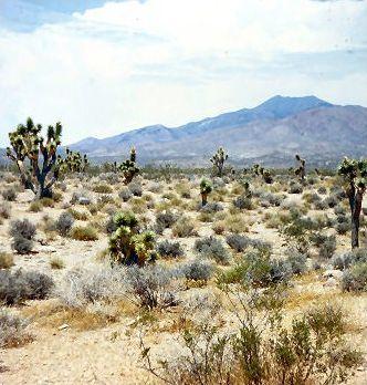 Destination de rêve - Las Vegas