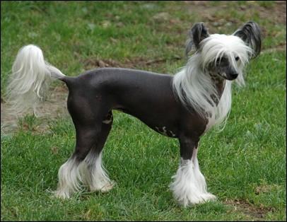 Quizz les animaux quiz animaux races chiens - Enlever poil de chien voiture ...