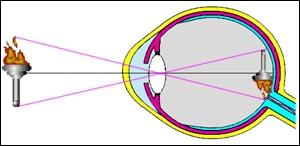 Le champ de vision de l'homme couvre 180°, et celui du chat s'étend sur