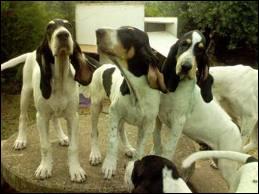 Un seul de ces chiens n'est pas un chien de chasse. Lequel ?