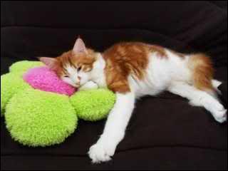 Certains chats pratiquent l'allo-toilettage, ce terme désigne l'action de
