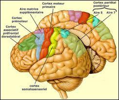 'L'intelligence est le seul outil qui permet à l'homme de mesurer l'étendue de ... '