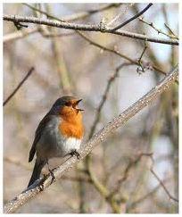 Quizz les oiseaux de nos jardins quiz jardins oiseaux for Oiseaux de jardin au printemps