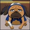 Pakkun, chien ninja invoqué par Kakahi est ...