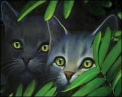 Quels chats arrivent après l'attaque des blaireaux ?