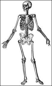 Biologie : combien de vertèbres cervicales un être humain normalement constitué possède-t-il ?