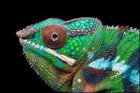 Quel animal n'est pas un reptile ?