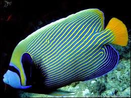 Quel animal n'est PAS un poisson ?