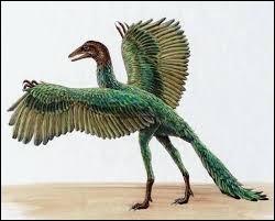 Mi-oiseau mi-reptile, il a des dents, des griffes et une longue queue mais aussi des ailes munies de plumes.