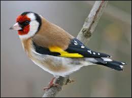 Quel animal n'est pas un oiseau ?