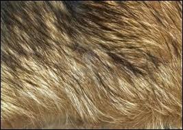 Quel est le seul animal à poils ?