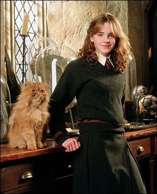 Quizz le chat fictif sous toutes ses facettes quiz chats for Dans harry potter comment s appelle le directeur
