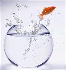 Quizz animaux de compagnie 2 quiz animaux for Aquarium poisson rouge changer l eau