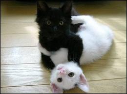 La durée de vie moyenne d'un chat se situe entre 10 et 15 ans, mais quel record a été établi par un matou anglais ?