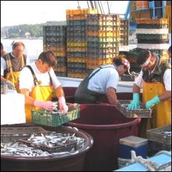 Pourquoi le port de pêche de Dieppe est-il réputé ?