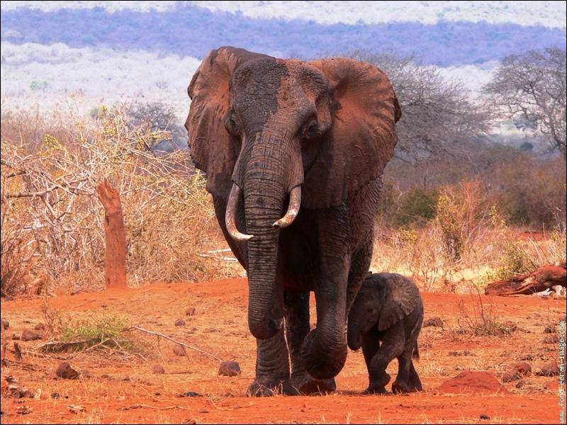 Qui a chanté ''Le Cimetière des éléphants'' ?