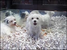 En 1952, Renaud (Line Renaud bien sûr ! ) demandait ''Combien ce p'tit chien dans la vitrine ? '' Alors ? Combien coûtait-il ?