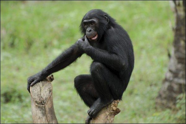 Quelle est cette race de singe ?