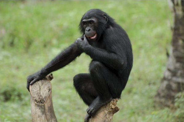 9 races de singes en photos