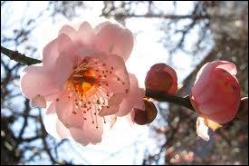 Quelle est cette fleur qui peut éclore en hiver ?