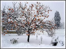 Quel est le mois d'hiver le plus froid ?