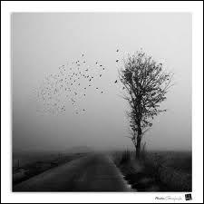Qui chante 'Vive le vent de l'hiver et la chanson de Prévert continue sa route à l'envers' ?