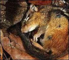 Qu'est-ce que l'hibernation ?