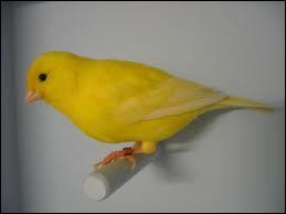Comment dit-on 'jaune' en anglais ?
