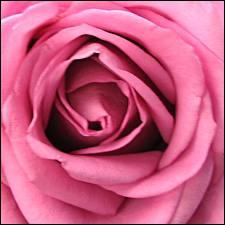 Comment dit-on 'rose' en anglais ?