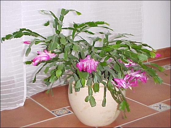 Quizz les plantes d 39 hiver quiz plantes for Couverture plante hiver