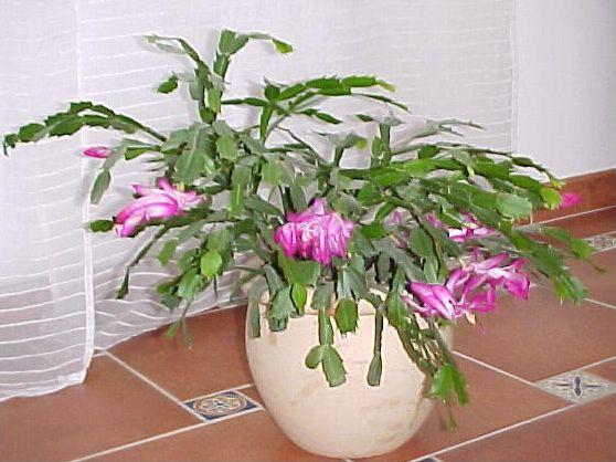 Quizz les plantes d 39 hiver quiz plantes hiver for Couvrir les plantes en hiver
