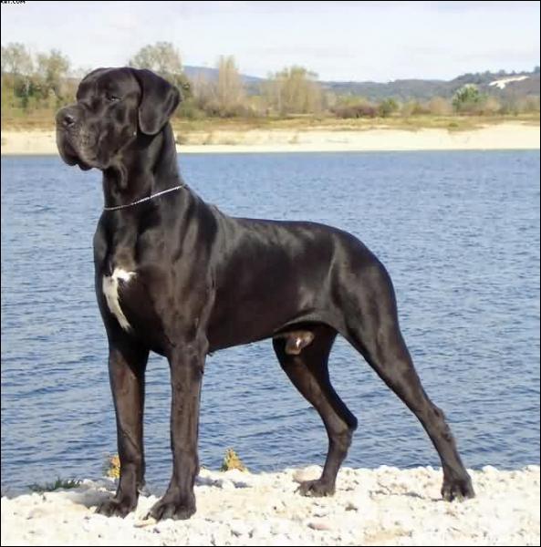 À quelle race ce chien appartient-il ?