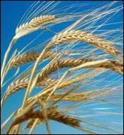 Quelle divinité de la mythologie romaine a des épis de blé pour attribut ?