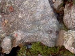 Dans quel art de la guerre Peeta est-il un surdoué ?