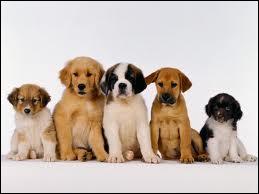 A quand remonte la première preuve de domestication du chien par l'homme ?
