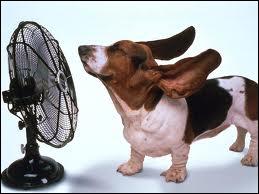 Quel chien de magazine télé se rafraichit avec un ventilateur ?