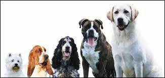 Combien y a-t-il de races de chien ?