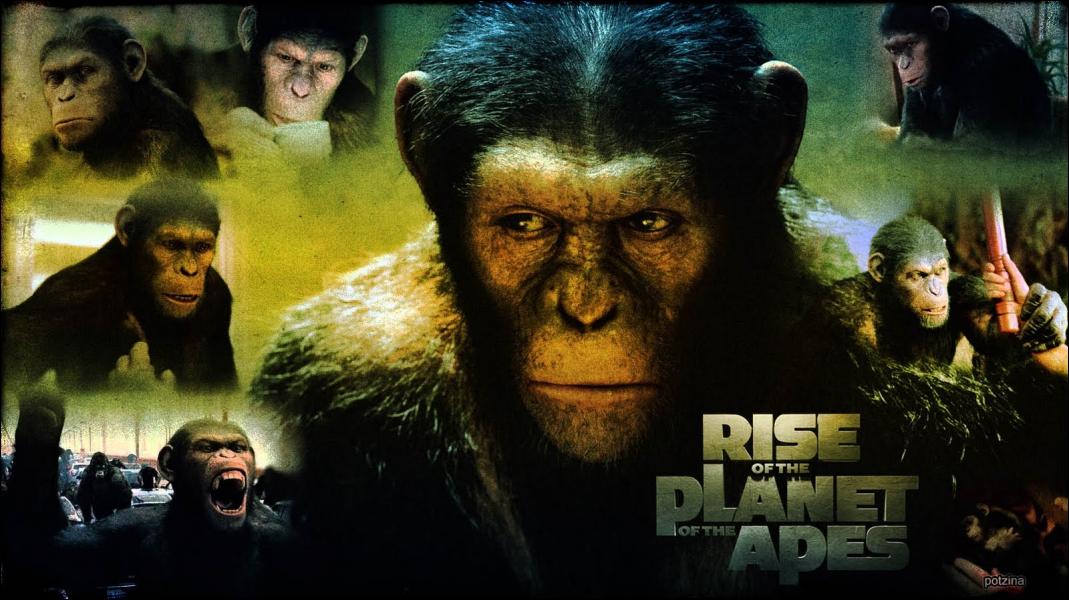 Dans le film, comment s'appelle le singe ?