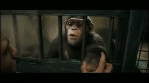 Comment César ou un autre singe peut-il avoir la permission d'un humain ?