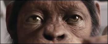 Sur cette photo, le singe a les yeux de quelle couleur ?