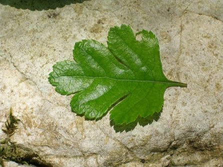 Les feuilles des arbres