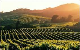 Dans quelle zone de la France est produite la merveilleuse boisson présente dans toutes les grandes fêtes du monde entier ?
