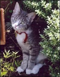 Quelle chatte domestique est la soeur de Coeur de Feu et la mère de Petit Nuage ?