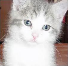 Quelle chatte est devenue reine en présence de Coeur de Feu ?