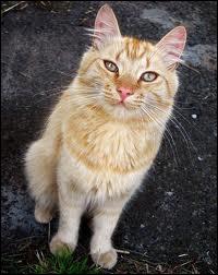 Quelle chatte a mis au monde Patte d'Or et Patte d'Épine ?